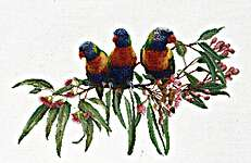 Click for more details of Lorikeets (cross stitch) by Thea Gouverneur