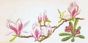 Magnolia and Primula