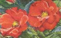Orangeade Rose