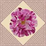 Click for more details of Painted Rose (cross stitch) by DoodleCraft Design