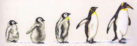 Click for more details of Penguins in a Row (cross stitch) by Anchor