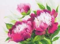 Click for more details of Pink Peonies (cross stitch) by Riolis