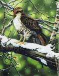 Click for more details of Red-Tailed Hawk (cross stitch) by Kustom Krafts