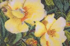 Click for more details of Rosa Hugonis (cross stitch) by Thea Gouverneur