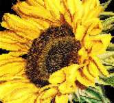 Click for more details of Sunflower (cross stitch) by Thea Gouverneur