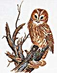 Click for more details of Tawny Owl (cross stitch) by Eva Rosenstand