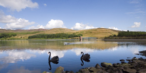 Click for more details of The Black Swans of Glenkiln (photograph) by Margaret Elliot