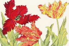 Click for more details of Tulip Blooms (cross stitch) by Bothy Threads