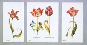 Click for more details of Tulips (cross stitch) by Thea Gouverneur