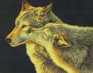 Click for more details of Wolf Kiss (cross stitch) by Dimensions