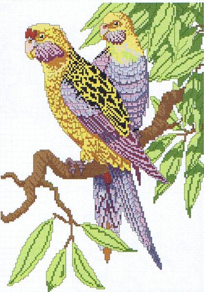 Parrots Cross Stitch Pattern By Kappie Originals