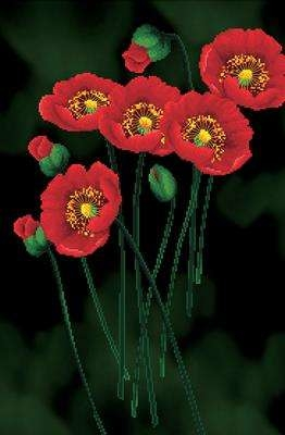 Red Poppies on Black