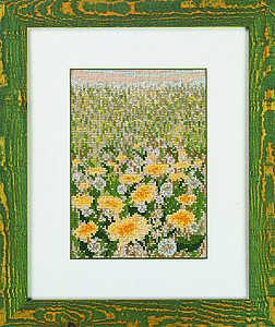 Dandelion field - click for larger image