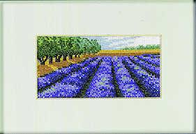 Lavender - click for larger image