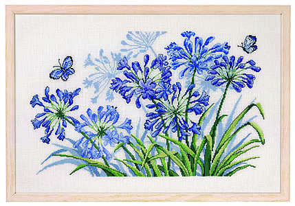 Agapanthus and blue butterfly
