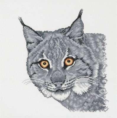 Lynx in Grey