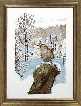Winter wren - click for larger image