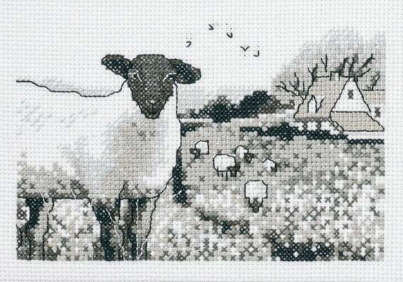 Sheep - click for larger image