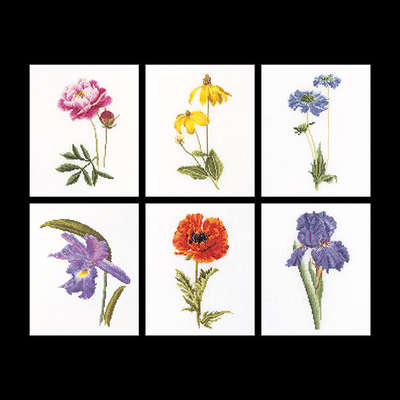 Cone flower, poppy, Peony, Orchid, Iris and Scabious