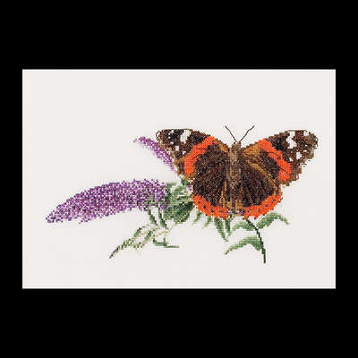 Red Admiral Butterfly with Buddlea
