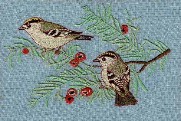 goldcrests
